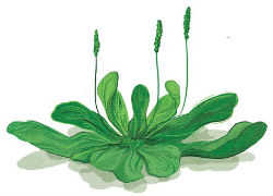 편집 가능한 weeds6 8 23
