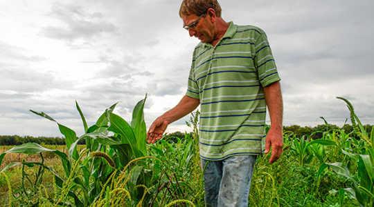 कैसे यह कैनसस किसान ने अपने खेत को स्थायी बनाए रखने के लिए एक सरकारी कार्यक्रम की शुरुआत की