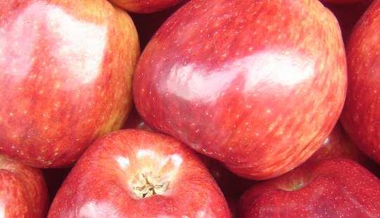 과일 도자기 2 9 19