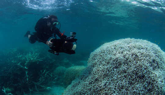 Korallblekning har visats på 93% av revet som utgör Great Barrier Reef. (C) XL Caitlin Seaview Survey