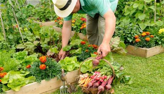 Growing Veggies, Not Grass, Will Cut Greenhouse Gases