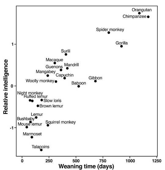 Relationship between weaning time and intelligence across primate species. (Credit: U. Rochester)