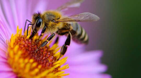 꿀벌 서식지를 개선하는 가장 좋은 방법은 무엇입니까?