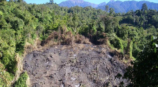 Hillside stripped of trees by slash-and-burn agriculture in Arunachal Pradesh, northeast India. Image: Prashanth NS via Flickr