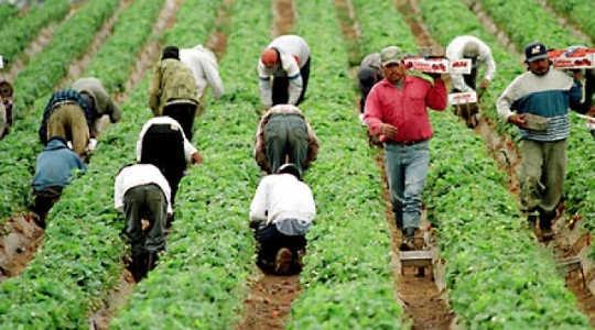 違法移民の追放がなぜ巨大経済争奪戦なのか
