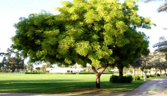 The Neem Compound May Shrink Prostate Tumors