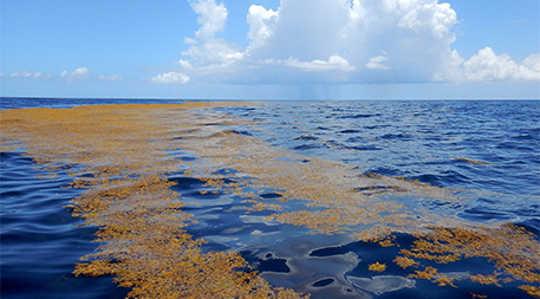 Kapsamlı bir düzenleyici çerçevenin olmayışı, Sargasso Denizini insani zararlardan koruma çabalarını engelledi. Tam Warner Minton tarafından fotoğraf (Flickr / Creative Commons)