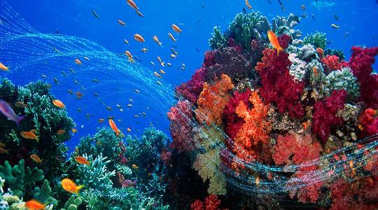 Dünya'nın Okyanuslarını Korumak İçin Yapabileceğimiz Bir Şey