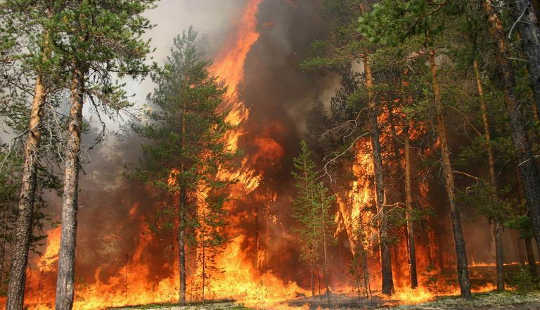 Vast Wildfires Are Burning far From Humans In Remote Siberia