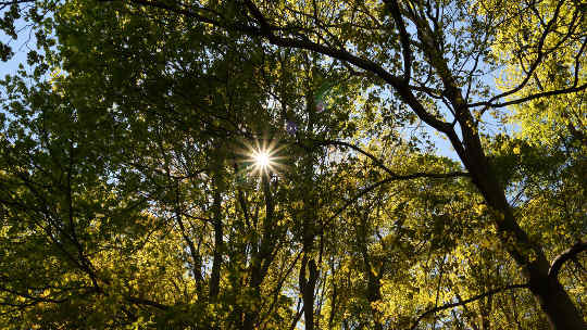 Two Forms of Nature Medicine: Sunlight and Forest Bathing