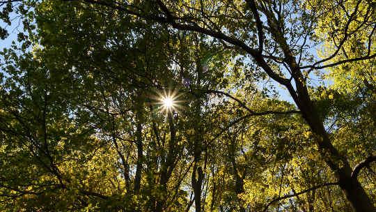 Dua Bentuk Perubatan Alam: Sinaran Matahari dan Mandi Hutan