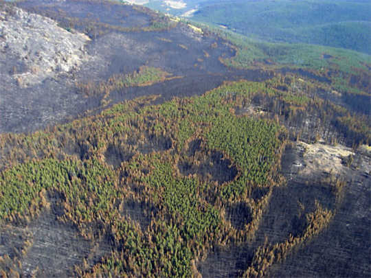 أحرقت أجزاء من حائط ثلاثي الأرجل في 2006 في نمط فسيفساء من الأشجار من مختلف الأعمار ، والتي يمكن أن تمنع الحروق المتلاصقة واسعة النطاق. إنه دليل على أن الحرق والتخفيف المحددين يمكن أن يجعل الغابات أكثر مرونة. خدمة الغابات في الولايات المتحدة