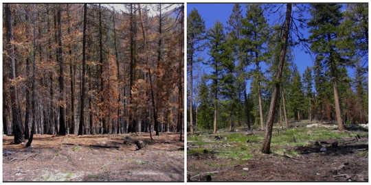 Onbeheerde staanplekke is in vergelyking met 'n aangrensende plot wat verdun is om kwesbaarheid vir ernstige vuur te verminder. Susan J Prichard, outeur voorsien