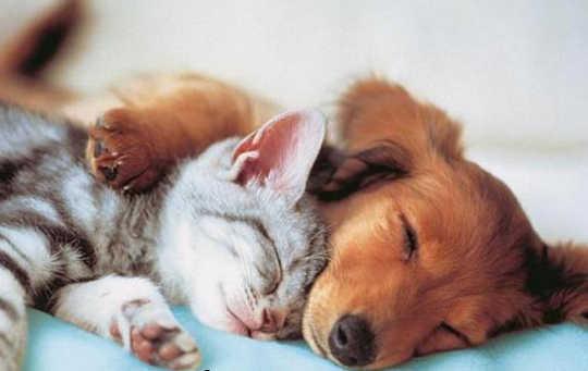 Интерпретация сообщений о мечтах о ваших домашних животных