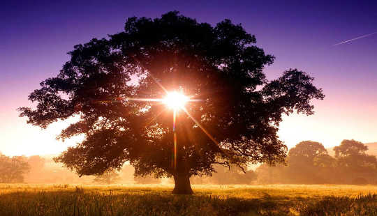 pohon kehidupan 11 21