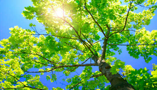 Trees Are Much Better At Cooling The Climate Than We Thought