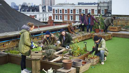 Five Creative Ways City Dwellers Can Still Grow Their Own
