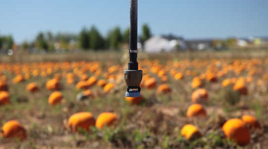 An irrigation system on a pumpkin patch in a semi-arid area of New Mexico in southwestern US. Image: Daniel Schwen via Wikimedia Commons