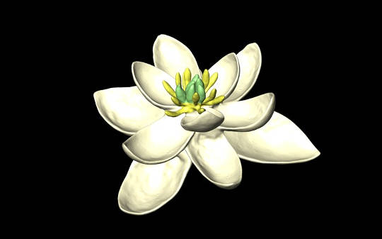 The First Ever Flower From 140m Years Ago, Looked Like A Magnolia