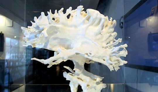 मानव मस्तिष्क को समझने के लिए क्यों एक कट्टरपंथी पुनर्विचार आवश्यक है