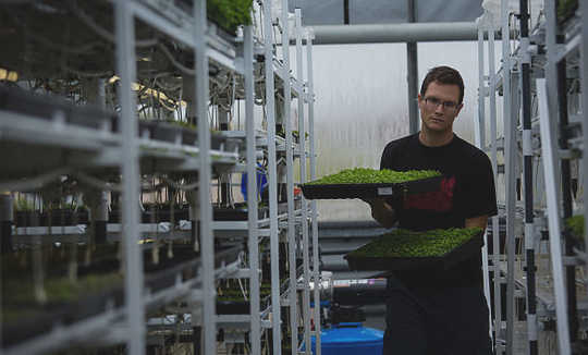 Are Microgreens Better For You Than Regular Greens?