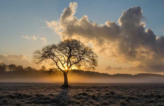 Miten minun puiden istuttaminen äitini käänsi visionsa todellisuuteen