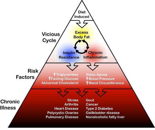 Forholdet mellom overfat og sykdom.