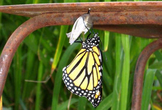 Học cách nắm bắt kinh nghiệm của sự thay đổi liên tục