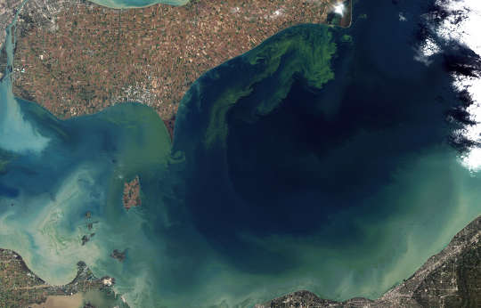 Voluntary Steps Are Failing To Shrink Algae Blooms And Dead Zones