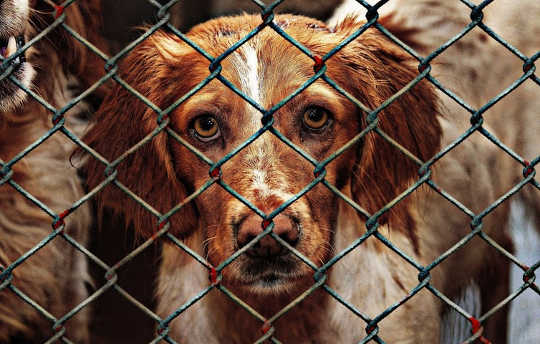 Puppy Farmed Dogs Show Worse Behavior, Suffer Ill Health And Die Young -- So Adopt, Don't Shop