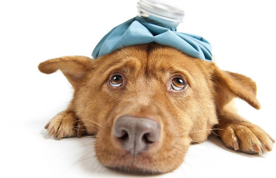 More Cats And Dogs Are Suffering From Chronic Health Conditions Too