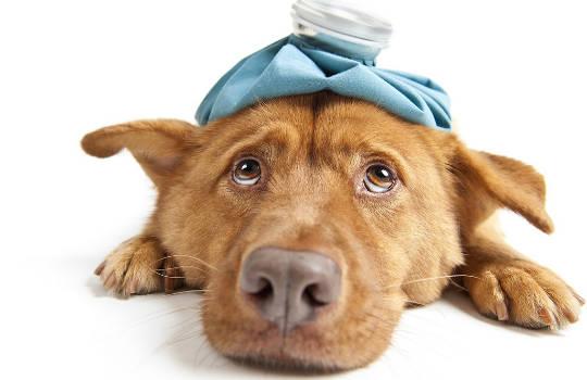 Fler katter och hundar lider av kroniska hälsoförhållanden också