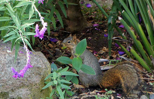 Squirrels, Like Humans, Use Chunking To Organize Their Nuts