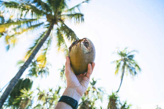 5 Claims About Coconut Oil Debunked
