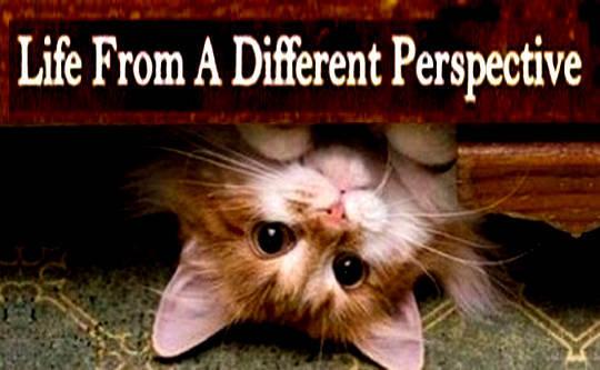 Wie man (und warum) die Dinge aus einer anderen Perspektive betrachtet