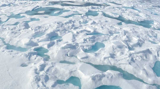 Plankton Blooms In The Arctic Meltwater Ponds Feed Climate Concerns