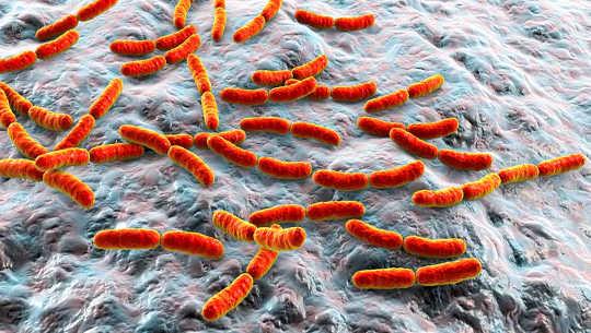 Bolehkah Mikroba Gusi Anda Menganggu Rawatan Kanser Anda?