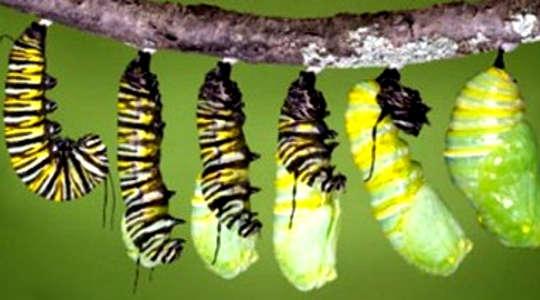 Hành trình cá nhân của bạn từ Cocoon đến Butterfly