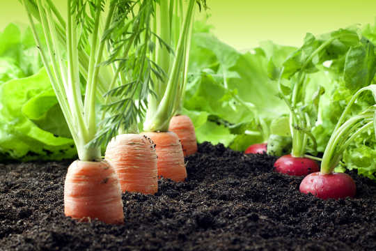 How Healthy Soils Make For A Healthy Life