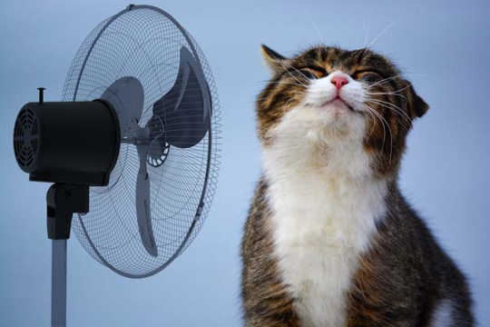 How To Keep Your Pets Cool Without Blowing Your Energy Bill