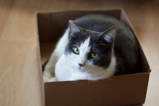 Why Can't Cats Resist Thinking Inside The Box?
