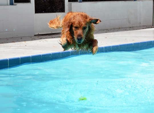 kolam anjing 4 11