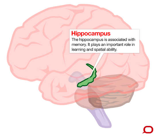甚至適度飲酒會導致腦損傷嗎?