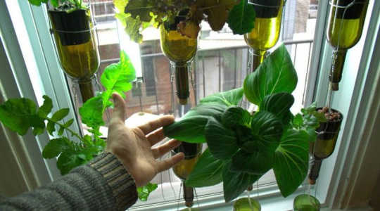 Dirt Free Indoor Garden Grows A Year Of Weekly Salads