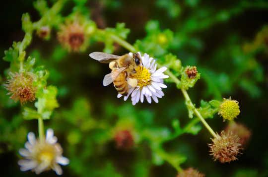 危機過去十年後,現在世界的蜜蜂正在發生什麼?