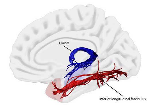 두뇌 연결이 어떻게 추억을 형성합니까?