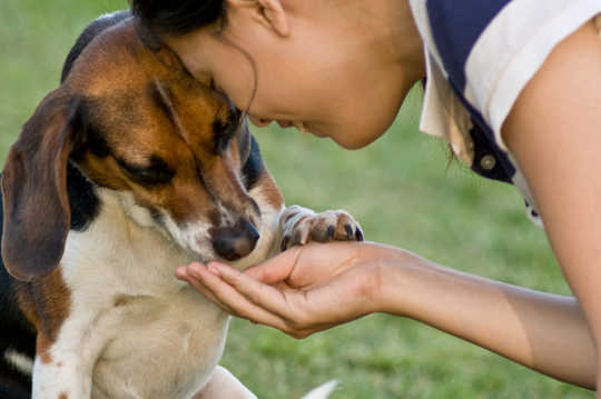 How To Feed Your Pet With The Environment And Sustainability In Mind
