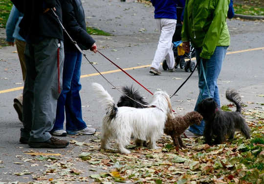 How Our Pets Strengthen Neighborhood Ties