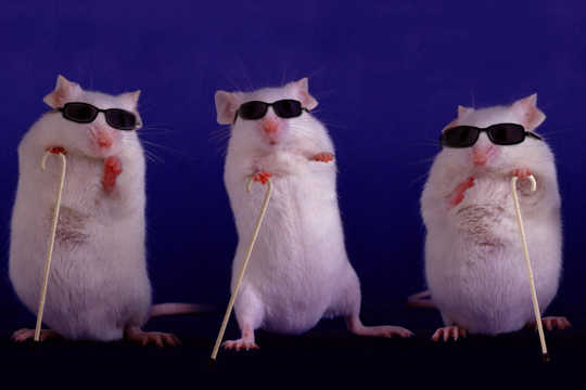 Blind Mice Get Their Sight Back After Gene Insertion