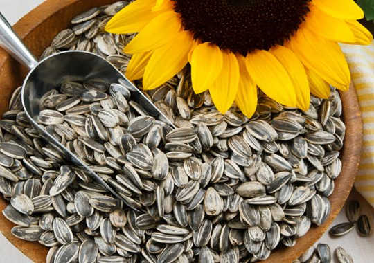 Aflatoxin Is A Cancer Causing Mold That Turns Up Also In Sunflower Seeds